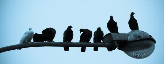 Birds on a lampost - all black, one white